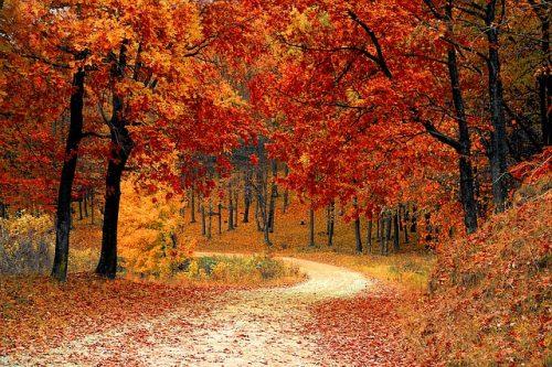 autumn-fall-walk